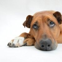 #dogalize Pancreatitis in Dogs: cause and symptoms #dogs #cats #pets