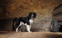 Tilly the farm dog by joyce grieves on Especie Animal, Farm Dogs, Olympus, Digital Camera, Animals, Diy Dog, Animales, Animaux, Digital Camo