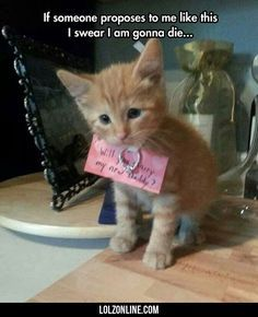 If Someone Proposes To Me Like This#funny #lol #lolzonline