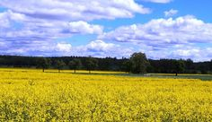 Is Your Family on a Vacation Travel Budget? Bargain Travel Sites Make Cheap Travel a Reality Cheap Travel, Budget Travel, Canola Field, Carbon Cycle, Yellow Fields, Vacation Trips, Germany, Amazing, How To Make