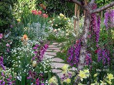 Foxgloves on a garden path #garden | garden paths | Pinterest