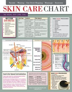 Skin Care Chart - 2-Sided Laminated - Quick Reference Guide - Cosmetology Charts