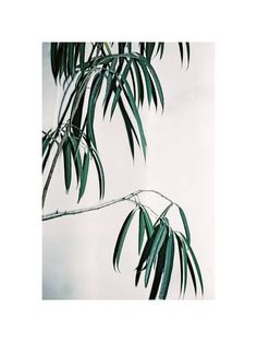Filatures Maupetit #palms