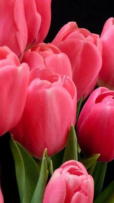 tulips_flowers_bouquet_pink_leaves_background_22394_640x11… | Flickr