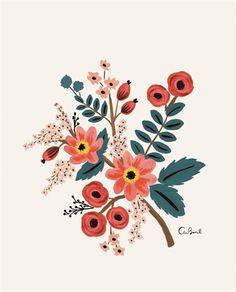 Rifle Paper Co. Coral Botanical Print
