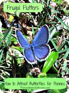 Tips for attracting butterflies to your yard without spending a lot of money on landscaping.