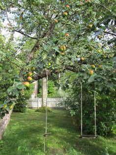 My Apple Tree ❤️