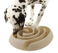 Dog food maze to slow down fast eaters. I might need this for my pup. He inhales his food in seconds.
