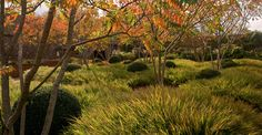 autumn in a garden in Norfolk, England by Tom Stuart-Smith (Photo by Jerry Harpur) buxus, rhus, and grasses Landscape Architecture, Landscape Design, Tom Stuart Smith, Smith Gardens, Chelsea Garden, Garden Levels, Garden Drawing, Natural Garden, Private Garden