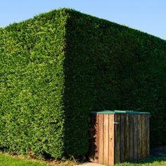 A public trash bin in a wooden box against a trimmed cedar hedge under a blue sky.