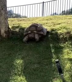 Animals And Pets, Baby Animals, Funny Animals, Cute Animals, Beautiful Creatures, Animals Beautiful, Tortoise Enclosure, Baby Tortoise, Cute Turtles