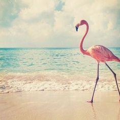 #Tuesday is #fabflamingo day! #birdnerd #nerdgirl #nerdlife
