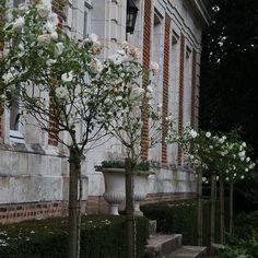 Jardin de Maizicourt, Mme Guevenoux, Maizicourt