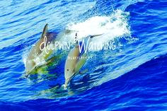 LAGOS Coast | Dolphin Watching - Observação de Golfinhos