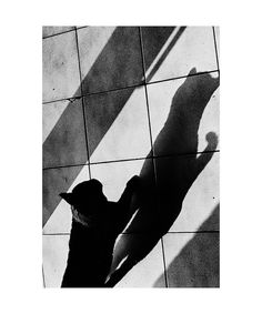 Sneak Shadow (April 2014) - Arno Dhooghe