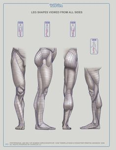 Exceptional Drawing The Human Figure Ideas. Staggering Drawing The Human Figure Ideas. Leg Anatomy, Anatomy Poses, Anatomy Art, Human Figure Drawing, Figure Drawing Reference, Anatomy Reference, Human Anatomy Drawing, Human Body Anatomy, Drawing Legs
