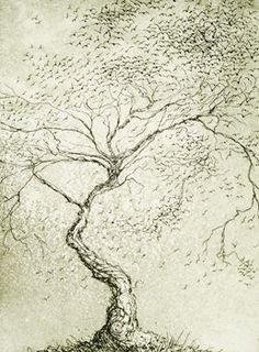 Tree of birds - Jeff Gardner Etching and Aquatint 2013  15 x 20 cm $180.00 Available at www.cascadeprintroom.com.au