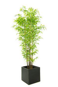 Kunst nep plant voor in woonkamer. Alleen prijs niet zo leuk. blanke bamboe compleet 190cm