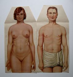 pair of early 20th century anatomical anatomy chart medical illustration