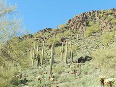 Jumping Cactus, Cave Creek Arizona, Tour Tickets, Cacti, Faeries, Regional, Trip Advisor, Scene, Hero
