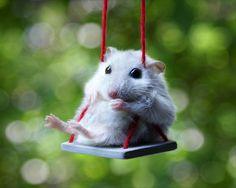 Hamster auf einer Schaukel - Grußkarte zum Geburtstag