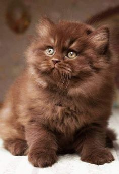 Cute Baby Cats, Cute Cats And Kittens, Cute Little Animals, Kittens Cutest, Pretty Cats, Beautiful Cats, Animals Beautiful, Puppies And Kitties, Cute Puppies