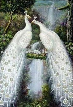 Animal oil painting,  Peacocks.