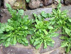 9 praktycznych zastosowań sody oczyszczonej w ogrodzie. Potrafi zdziałać wiele dobrego!
