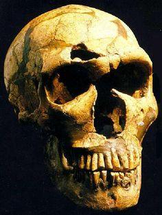 Homo neanderthalensis , es una especie extinta del género Homo que habitó Europa y partes de Asia occidental desde hace 230 000 hasta 28 000 años atrás, durante el Pleistoceno medio y superior y culturalmente integrada en el Paleolítico medio. En un periodo de aproximadamente 5000 años se cree convivió paralelamente en los mismos territorios europeos con el Hombre de Cro-Magnon, primeros hombres modernos en Europa.