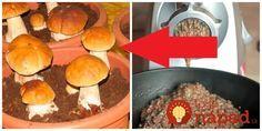 Trik od skúsenej hubárky: Odložte si pár húb bokom, zomeľte ich v mlynčeku na mäso a dajte do črepníka, vyrastie vám táto nádhera! Garden Park, Herb Garden, Home And Garden, Ikebana, Poultry, Indoor Plants, Sweet Potato, Dog Food Recipes, Flora