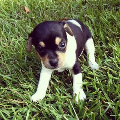 is this what Biggie looked like when he was a pup?! i wish i had him at this age and size.