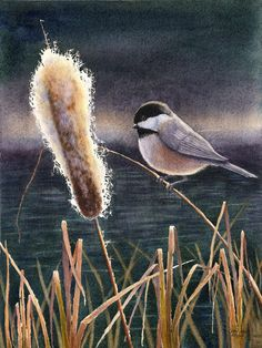 Black Capped Chickadee print of original watercolor painting $20