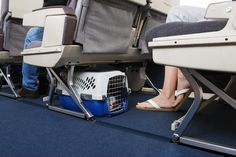 Fees, max carrier weight and dimensions and airlines policies vary greatly when flying with a pet in cabin between the US and Europe. Here's the ultimate guide.