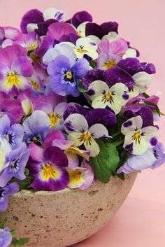 A garden to care: Who does not like pansies?