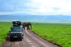 This was one of the most amazing safari moments we had. This day was one of our first days going on safari and we had to drive through the Ngorongoro Crater to get to the Serengeti. It was incredible how close the elephant got to our jeep and wasn't even fazed by us. Photo by Charlotte Vincent.