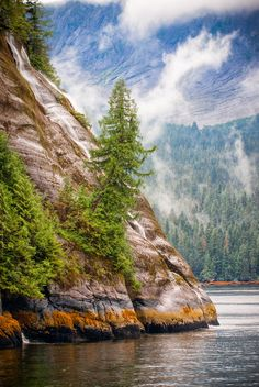 Mountainside trees reach for the sun in Misty Fjords, Alaska.