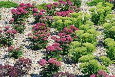 Záhrada na suchom mieste Garden, Plants, Cactus, Garten, Lawn And Garden, Gardens, Plant, Gardening, Outdoor