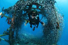 Diver swimming through a fish bowl in a wreck by Michel Braunstein on 500px