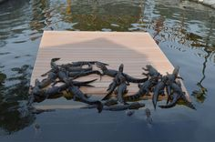 """Rencontre insolite avec des bébés alligators en plein parcours de Mini Golf - Carnet de voyage """"Voyage en Floride"""""""
