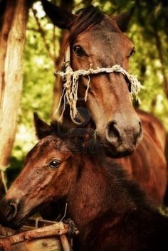 Baby and mom horse pictures | mother and baby red horses outdoor