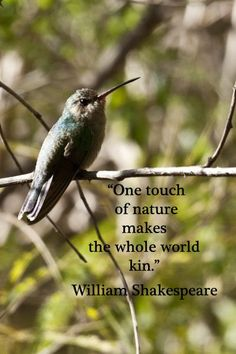 One Touch Of Nature Makes The Whole World Kin. * William Shakespeare *