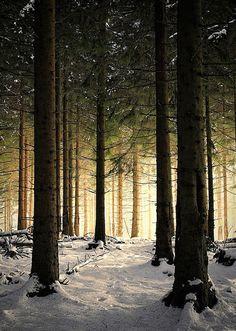 Winter light.