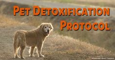 Do dogs need a detox like us? Here's how to detoxify your dog.