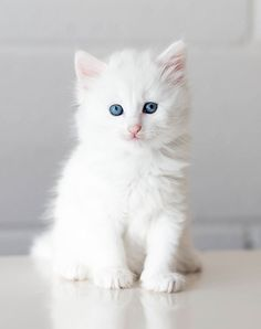 Cute Baby Cats, Baby Kittens, Cute Cats And Kittens, Cute Baby Animals, Kittens Cutest, Pretty Cats, Beautiful Cats, Animals Beautiful, Warrior Cats