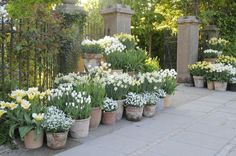 From Claus Dalbys garden in Risskov, Denmark.  www.clausdalby.dk