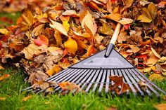 Fall lawn care tips from the pros at Consumer Reports that will ensure you'll have a lush lawn in the spring. Leaf Clean Up, Fall Clean Up, Fall Lawn Care, Lawn Care Tips, Organic Gardening, Gardening Tips, Container Gardening, Lawn And Garden, Garden Tools