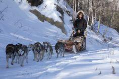 USA: Hundeschlittenrennen Iditarod in Alaska   (rf) Am 1. März 2014 startet im US-Bundesstaat Alaska das härtestes Hundeschlittenrennen der Welt. Neun Tage benötigen die besten Musher mit ihren Hundeschlittenteams für die über 1.800 Kilometer ...   Link: http://www.reisefernsehen.com/reise-news/reise-news-aus-aller-welt/387115a2cb104a201-usa-hundeschlittenrennen-iditarod-in-alaska.php