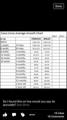 Cane Corso growth chart