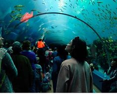 Lucy and the aquarium