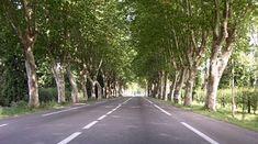 N7-platanes-tout-le-charme-Paris-Lyon-Avignon-National-7-provence-Cote-d-Azur-France-Europe. Beautiful Roads, Wander, Road Trip, Country Roads, Places, Travel, Lyon, Provence, Photographs